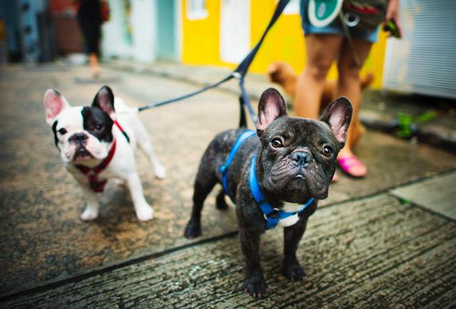اختيار أفضل غذاء الكلب للحصول على نصائح لابرادور الخاص بك