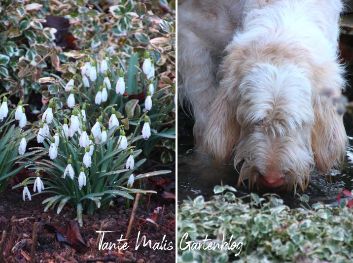 Frühlingsgarten Hund