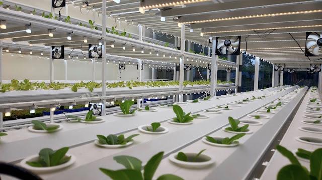 Hadirkan Teknologi urban Farming, Tunas Farm Dapat Pendanaan Awal Dari Gayo Capital