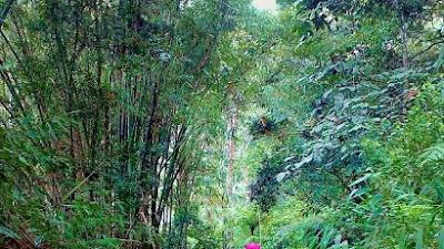 Yuk... Wisata Hiking di Padang Panjang !