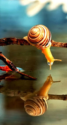 escargot regardant son reflet