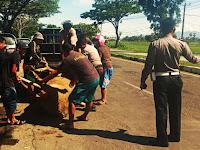 Gegara Kerbau Nyebrang Jalan Digelap Gulita, Mobil Innova Alami Lakalantas di Pangkep