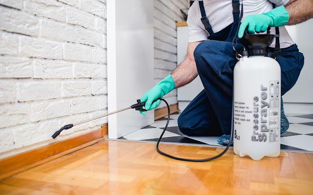 ما هي طرق مكافحة الحشرات .. طرق فعالة للتخلص من الحشرات في المنزل