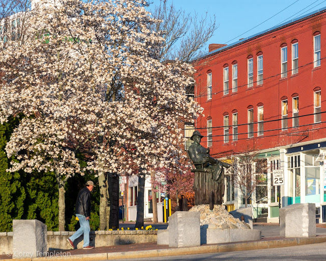 Portland, Maine April 2021 photo by Corey Templeton. The tree behind the John Ford statue doing its thing and looking photogenic on a spring morning.