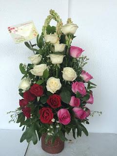 Bunga Meja Mawar hidup