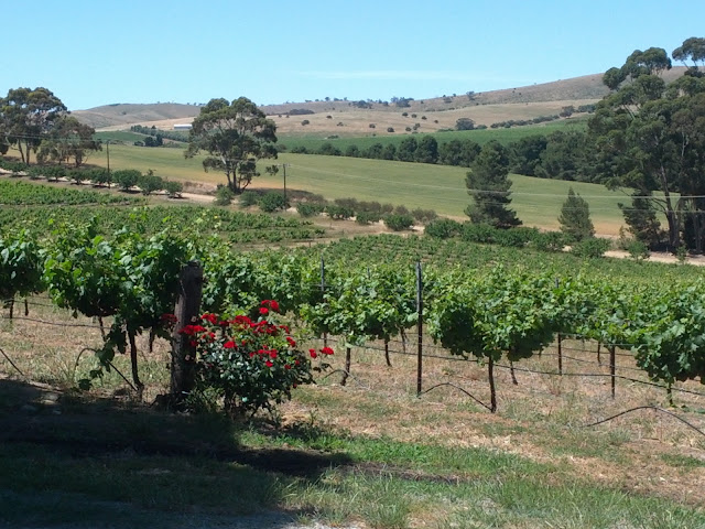 Clare Valley winery