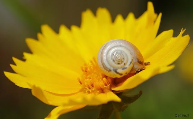 Escargot sur oeil de jeune fille