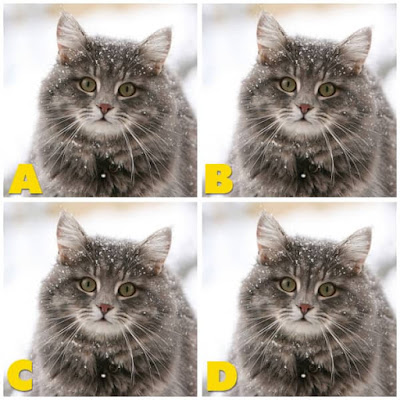 Quiz Diva - Kitty Difference Answers 40 Questions Score 100% image 42