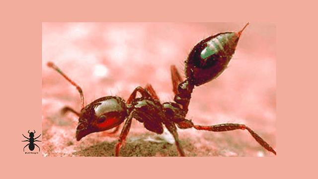 ✅características-tipos-de-hormigas-ants