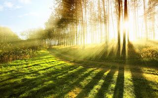 cahaya matahari, komponen abiotik