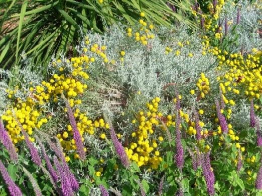ma plan te jardin floraisons exotiques et mediterran ennes. Black Bedroom Furniture Sets. Home Design Ideas