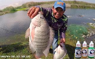 Essen Ikan Nila Khusus Di Situ