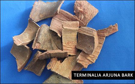 Terminalia arjuna bark
