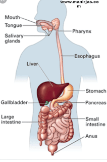 Chemical digestion definition and digestion process
