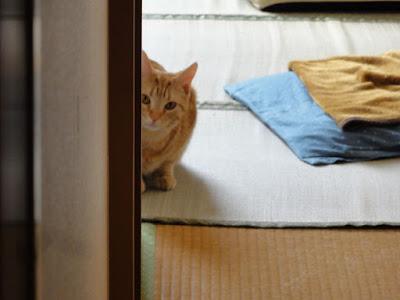 猫が物陰から体を半分出して、こちらを見ています。