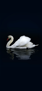 White Duck Mobile HD Wallpaper