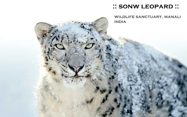 Manali Attraction -  Wildlife Parks Manali