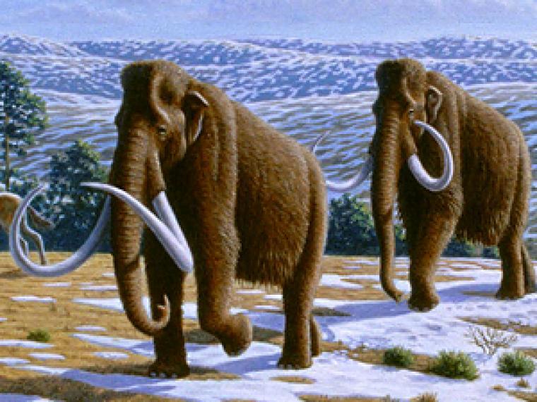 mamut vivo