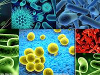 Antimikroba - jenis, penggolongan, mekanisme kerja