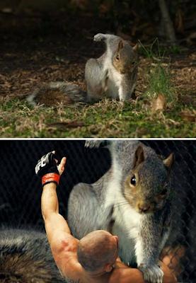 Witziges aggressives Eichhörnchen