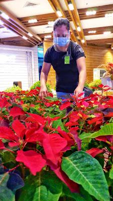 CHRISTMAS BLOOMS, PLANTS TOP PICK AT SM CITY MARILAO' S GARDENING FAIR