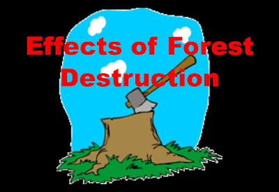 ill-effects of forest destruction