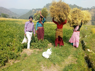 organic-farming-uttrakhand
