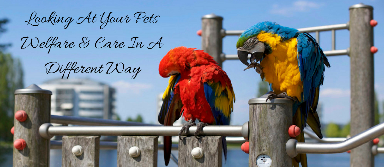 The Welfare And Care Of Your Pet The Parrot life Way