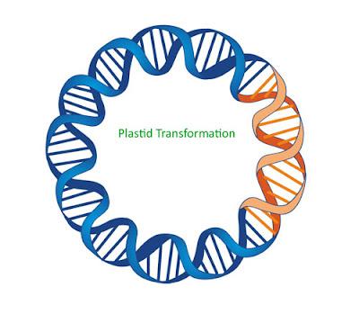 Plastid Transformation