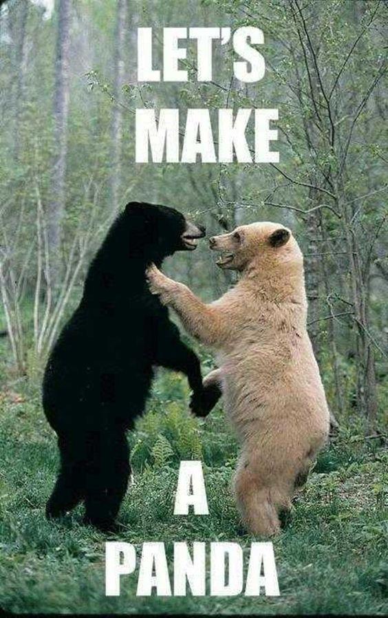 Funny Animal Memes (2)