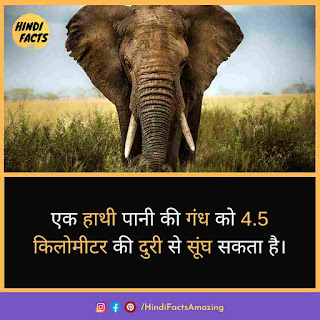 fact about elephant in hindi