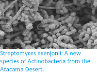 http://sciencythoughts.blogspot.co.uk/2017/11/streptomyces-asenjonii-new-species-of.html