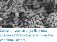 http://sciencythoughts.blogspot.co.uk/2017/11/streptomyces-asenjonii-new-species-of.html