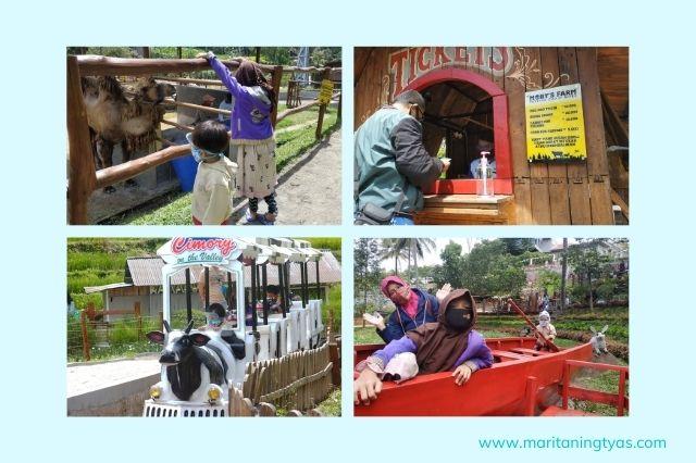 banyak hewan dan tanaman di Cimory Farm Mini Zoo