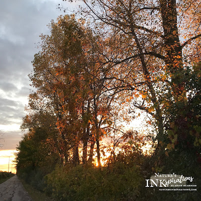 Fall in NW Ohio, USA | Nature's INKspirations by Angie McKenzie
