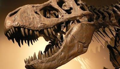 Tyrannosaurus rex Ternyata Tidak Bisa Menjulurkan Lidahnya