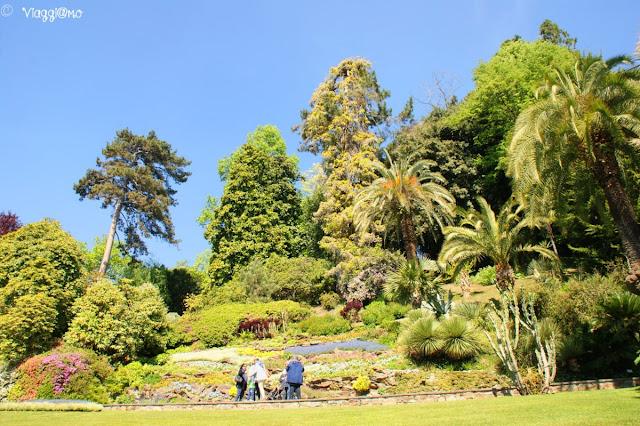 Gli alberi di alto fusto presenti nel giardino di Villa Carlotta