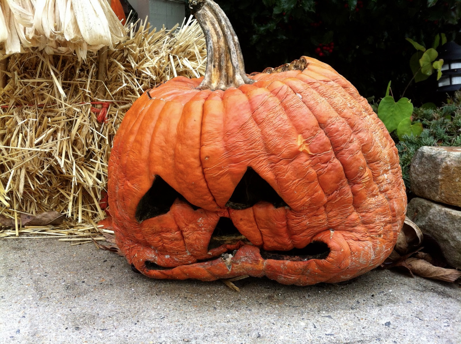 Our Permaculture Life: Halloween Pumpkins: The Day After?
