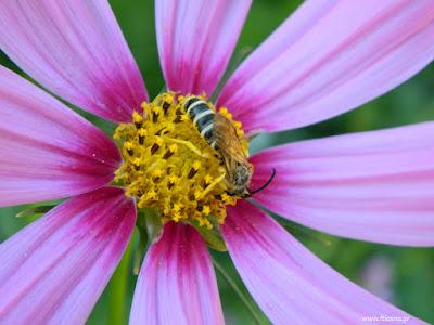 Φυσική τροφή για μέλισσες