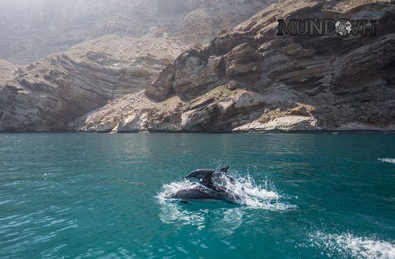 Socotra_Yemen