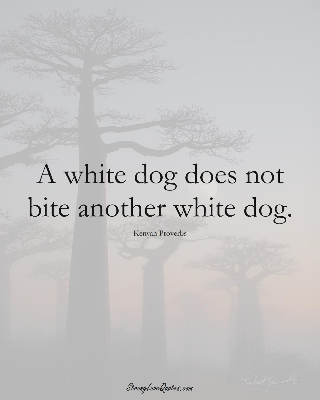 A white dog does not bite another white dog. (Kenyan Sayings);  #AfricanSayings