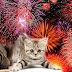 Ενοχλούνται οι γάτες από τα πυροτεχνήματα;