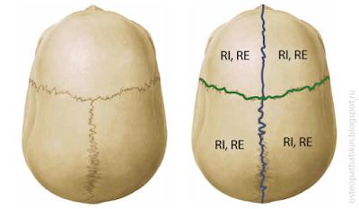 Квадранты черепа. Возможные положения:  внутренняя ротация, или rotation internal обозначается обычно RI,  наружная ротация, или  rotation external обозначается обычно RE