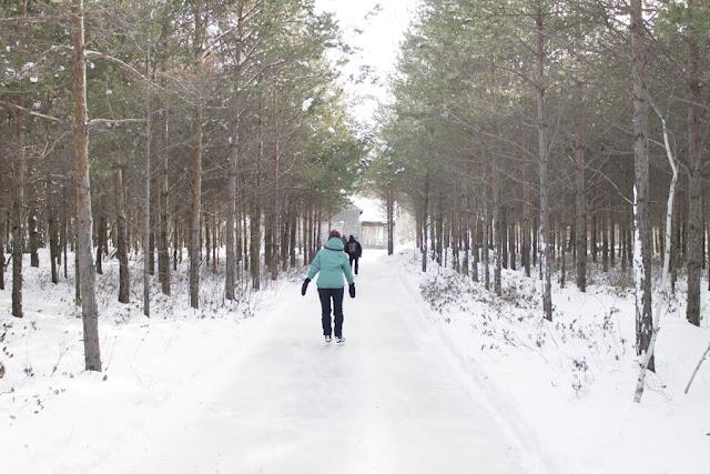 sentiers glacés Domaine de la forêt perdue patinage