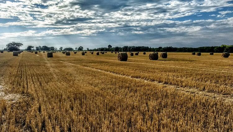Mercado inmobiliario rural, crecen las consultas en el sector alquiler de campos