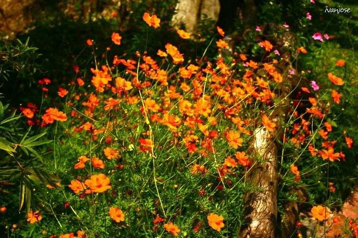 Lush bloom of flowers in Sarangani Highlands' garden in Mindanao