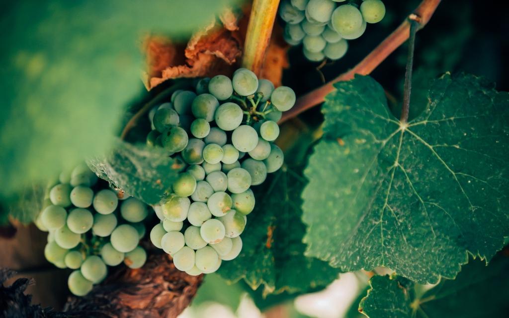 Mini przewodnik po alzackich rodzajach win