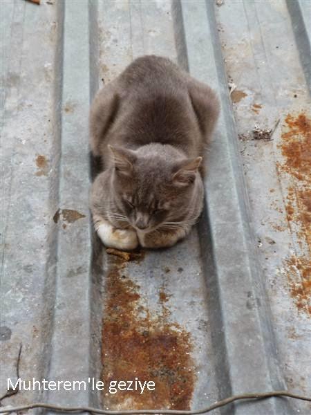 çatıda ki kedi