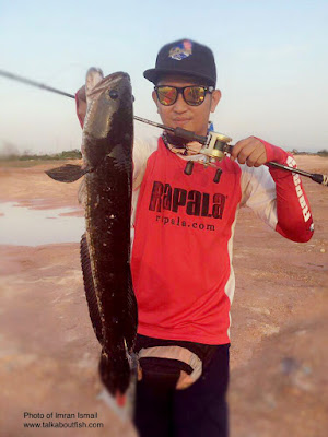 Striped Snakehead, Snakehead Murrel