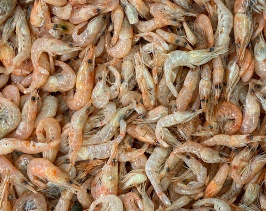 aprende ingles animal langostino prawn blanco comida